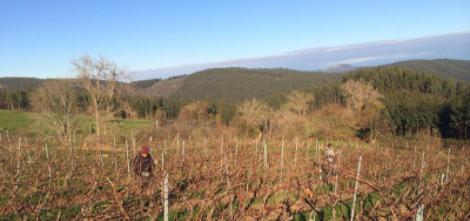 Bodegas Vidular. Enoturismo Cantabria