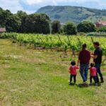 Enoturismo Cantabria Semana Santa. Bodegas Vidular